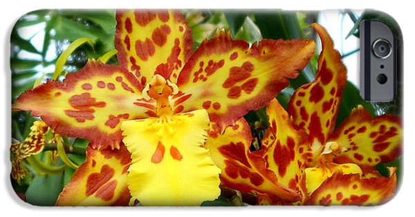 Tropical Red And Yellow Orchids IPhone 6s Case