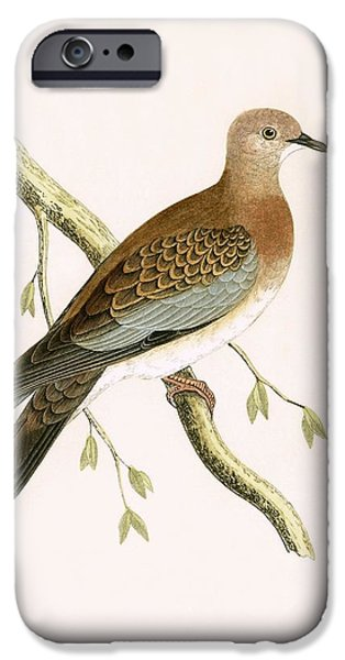 Turtle Dove IPhone 6s Case by English School