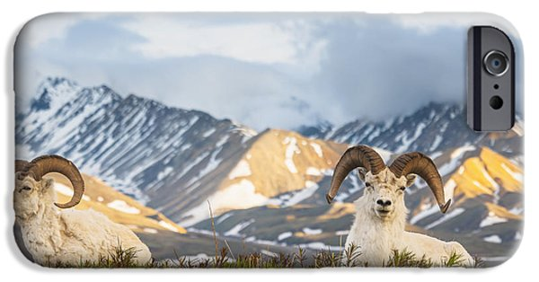Two Adult Dall Sheep Rams Resting IPhone 6s Case by Michael Jones