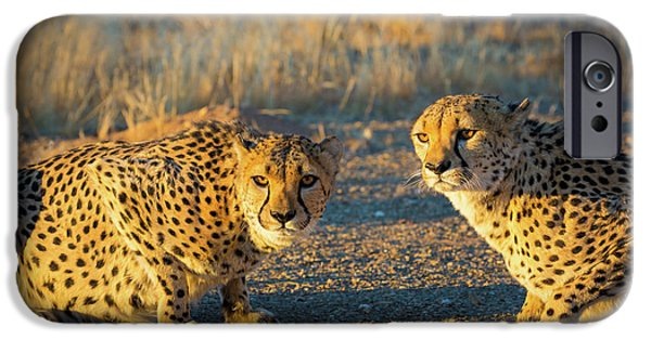 Two Cheetahs IPhone 6s Case by Inge Johnsson