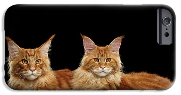 Cat iPhone 6s Case - Two Ginger Maine Coon Cat On Black by Sergey Taran