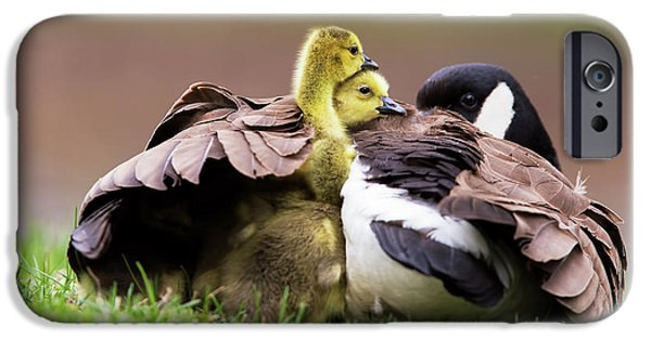 Gosling iPhone 6s Case - Under Mama's Wings by Mircea Costina Photography