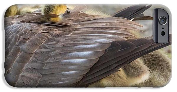 Gosling iPhone 6s Case - Under Moms Wings by Marc Crumpler