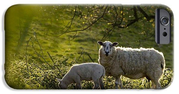 Sheep iPhone 6s Case - Under The Setting Sun by Angel Ciesniarska
