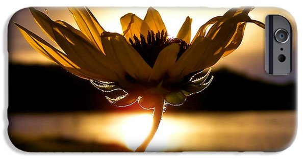 Sunflower iPhone 6s Case - Uplifting by Karen Scovill