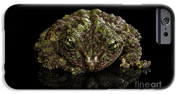 Vietnamese Mossy Frog, Theloderma Corticale Or Tonkin Bug-eyed Frog, Isolated On Black Background IPhone 6s Case