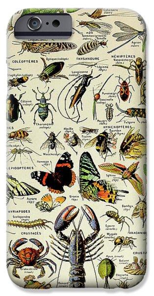 Vintage Illustration Of Various Invertebrates IPhone 6s Case
