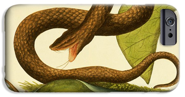 Viper Fusca IPhone 6s Case by Mark Catesby