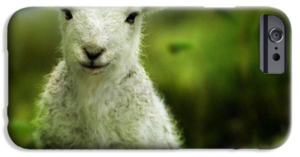 Sheep iPhone 6s Case - Welsh Lamb by Angel Ciesniarska