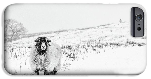 Sheep iPhone 6s Case - Which Way Is South? by Janet Burdon
