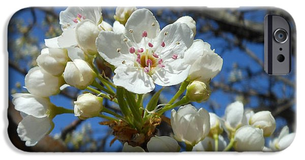 White Blossoms Blooming IPhone 6s Case