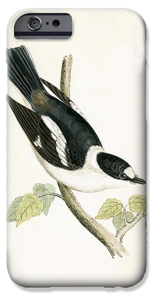 White Collared Flycatcher IPhone 6s Case