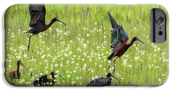 White-faced Ibis Rising, No. 1 IPhone 6s Case