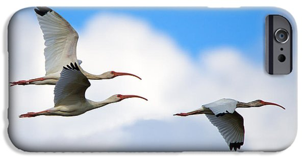 Ibis iPhone 6s Case - White Ibis Flock by Mike Dawson