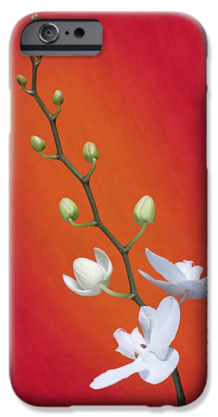 White Orchid Buds On Red IPhone 6s Case by Tom Mc Nemar