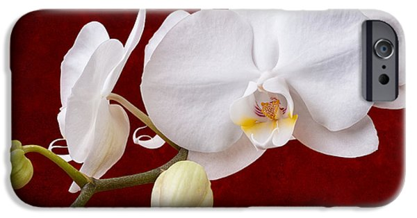 White Orchid Closeup IPhone 6s Case by Tom Mc Nemar