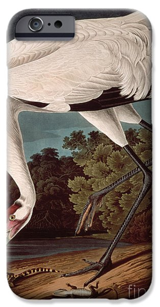 Crane iPhone 6s Case - Whooping Crane by John James Audubon