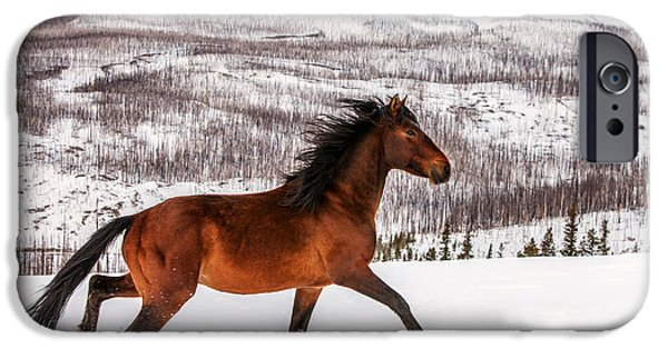 Horse iPhone 6s Case - Wild Horse by Todd Klassy