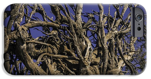 Wild Tangled Tree Roots IPhone Case by Garry Gay