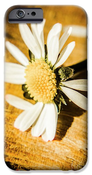 Daisy iPhone 6s Case - Wilt by Jorgo Photography - Wall Art Gallery