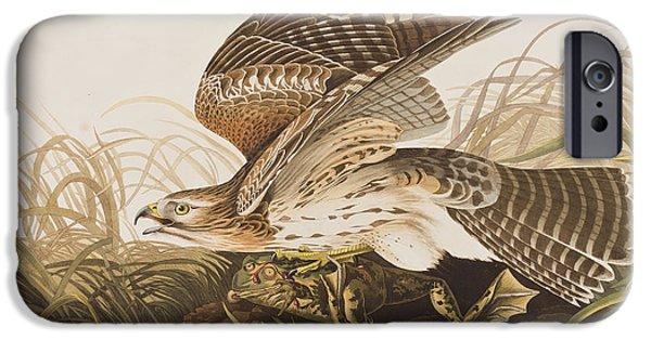 Winter Hawk IPhone 6s Case by John James Audubon