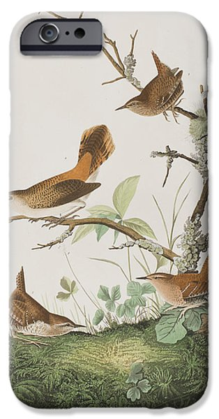 Winter Wren Or Rock Wren IPhone 6s Case by John James Audubon