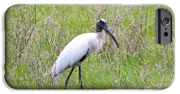 Wood Stork In The Marsh IPhone 6s Case by Carol Groenen