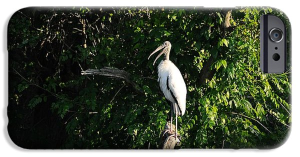 Wood Stork-out On A Limb IPhone Case by Al Powell Photography USA