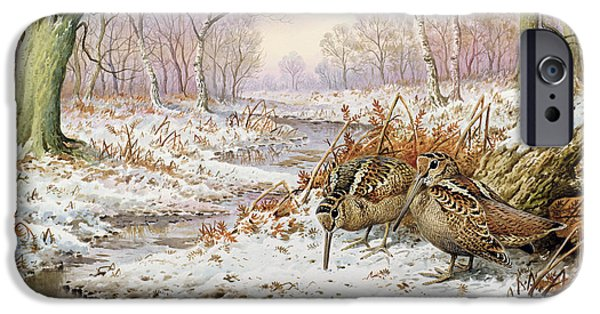 Woodcock IPhone 6s Case by Carl Donner