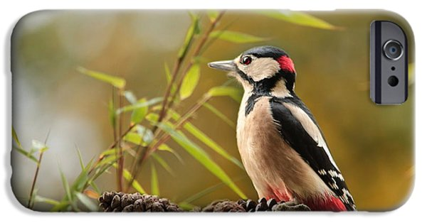 Woodpecker 3 IPhone 6s Case by Heike Hultsch
