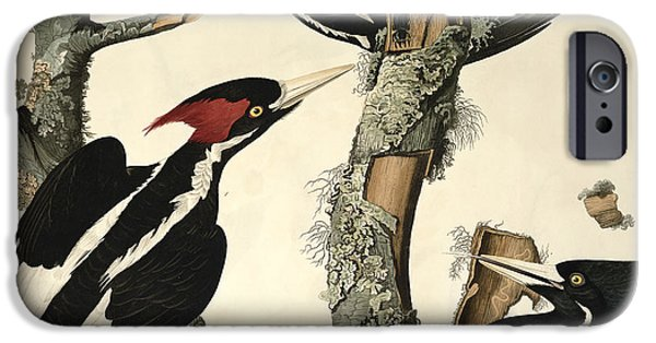 Woodpecker IPhone 6s Case