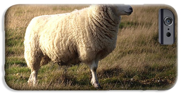 Sheep iPhone 6s Case - Woolly Coat by Sharon Lisa Clarke