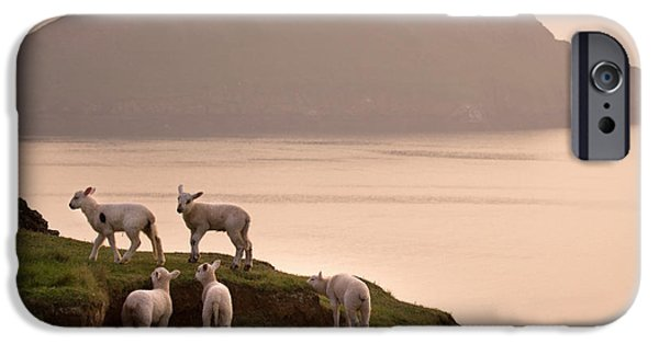 Sheep iPhone 6s Case - Worms Head by Angel Ciesniarska