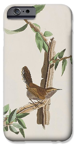 Wren IPhone 6s Case by John James Audubon