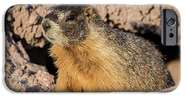 Yellow-bellied Marmot - Capitol Reef National Park IPhone 6s Case