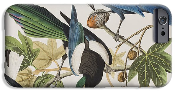 Magpies iPhone 6s Case - Yellow-billed Magpie Stellers Jay Ultramarine Jay Clark's Crow by John James Audubon
