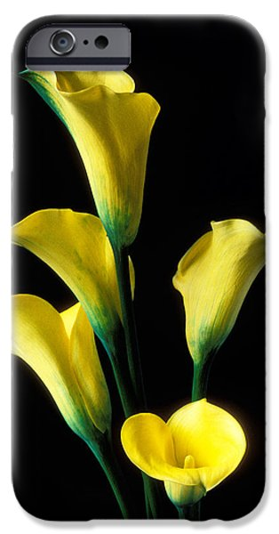 Lily iPhone 6s Case - Yellow Calla Lilies  by Garry Gay