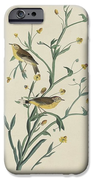 Yellow Red-poll Warbler IPhone 6s Case