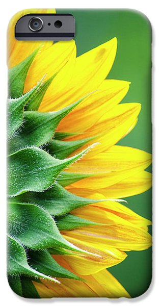 Yellow Sunflower IPhone 6s Case by Christina Rollo