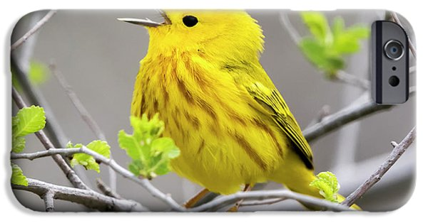 Yellow Warbler  IPhone 6s Case by Ricky L Jones