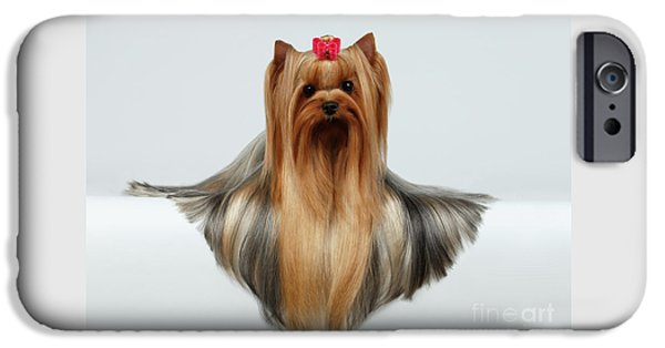 Yorkshire Terrier Dog With Long Groomed Hair Lying On White  IPhone 6s Case by Sergey Taran