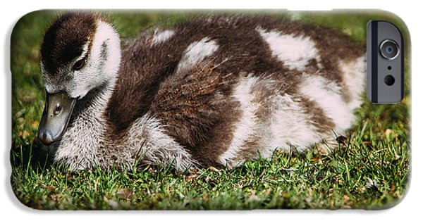 Gosling iPhone 6s Case - Young Baby Goose by Pati Photography
