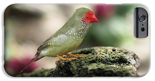 Young Star Finch IPhone 6s Case