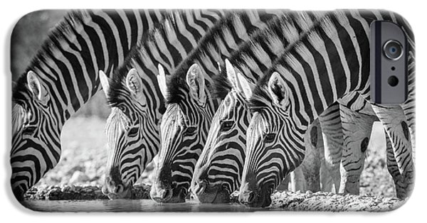 Zebras Drinking IPhone 6s Case by Inge Johnsson