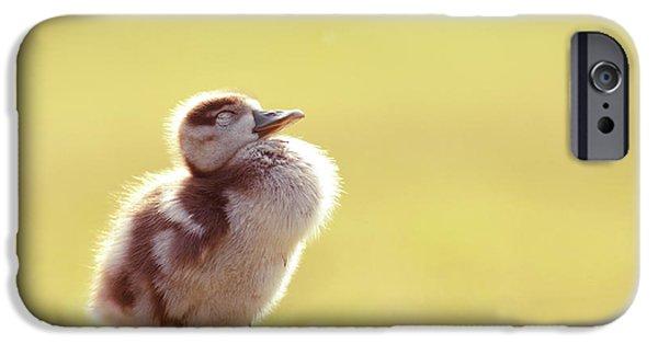 Gosling iPhone 6s Case - Zen Bird - Gosling Enjoying The Sun Light by Roeselien Raimond