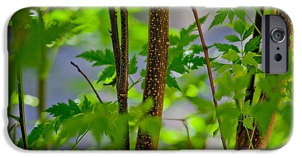 New Leaf iPhone 6s Case - Zen Forest by Az Jackson
