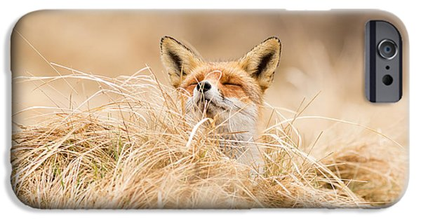 Zen Fox Series - Zen Fox 2.7 IPhone 6s Case