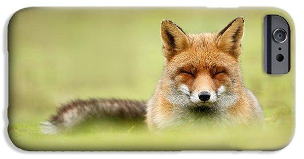 Zen Fox Series - Zen Fox In A Sea Of Green IPhone 6s Case by Roeselien Raimond