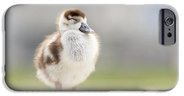 Gosling iPhone 6s Case - Zen Gosling by Roeselien Raimond
