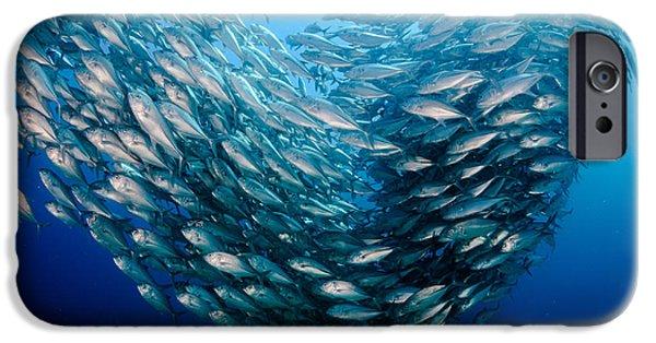 Scuba Diver iPhone 6s Case - Big Eye Trevally Jack, Caranx by Leonardo Gonzalez